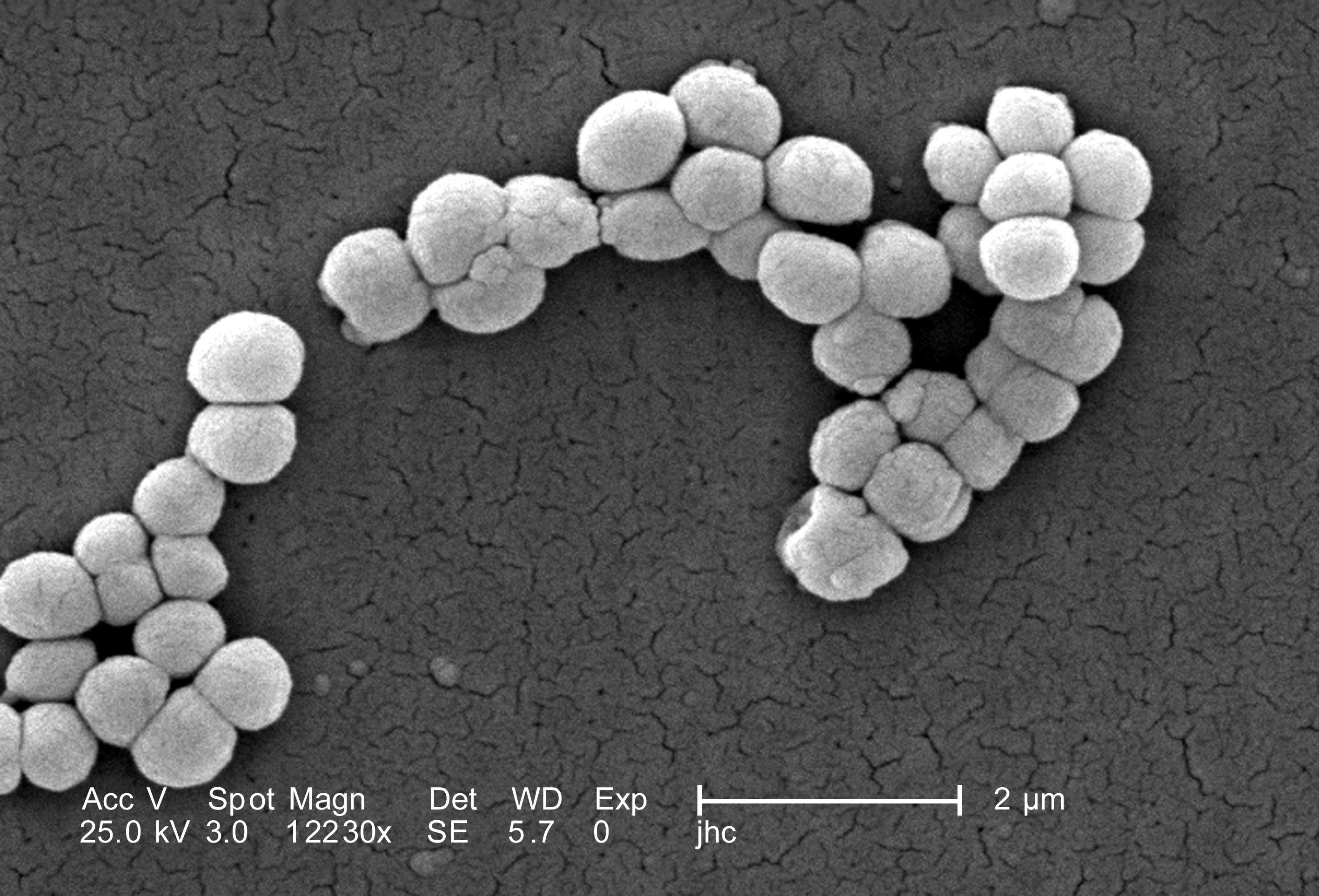 identifying micrococcus luteus essay This feature is not available right now please try again later.