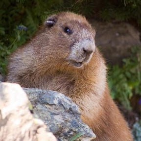 Vancouver Island Rodent Rescue