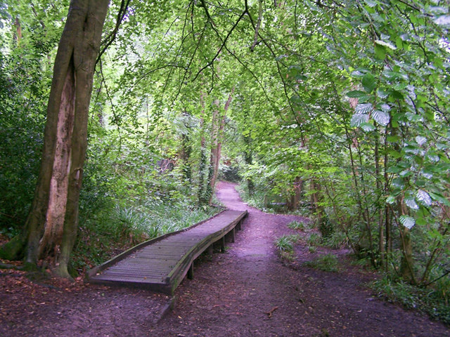 Path in the woodland park - geograph.org.uk - 1433441