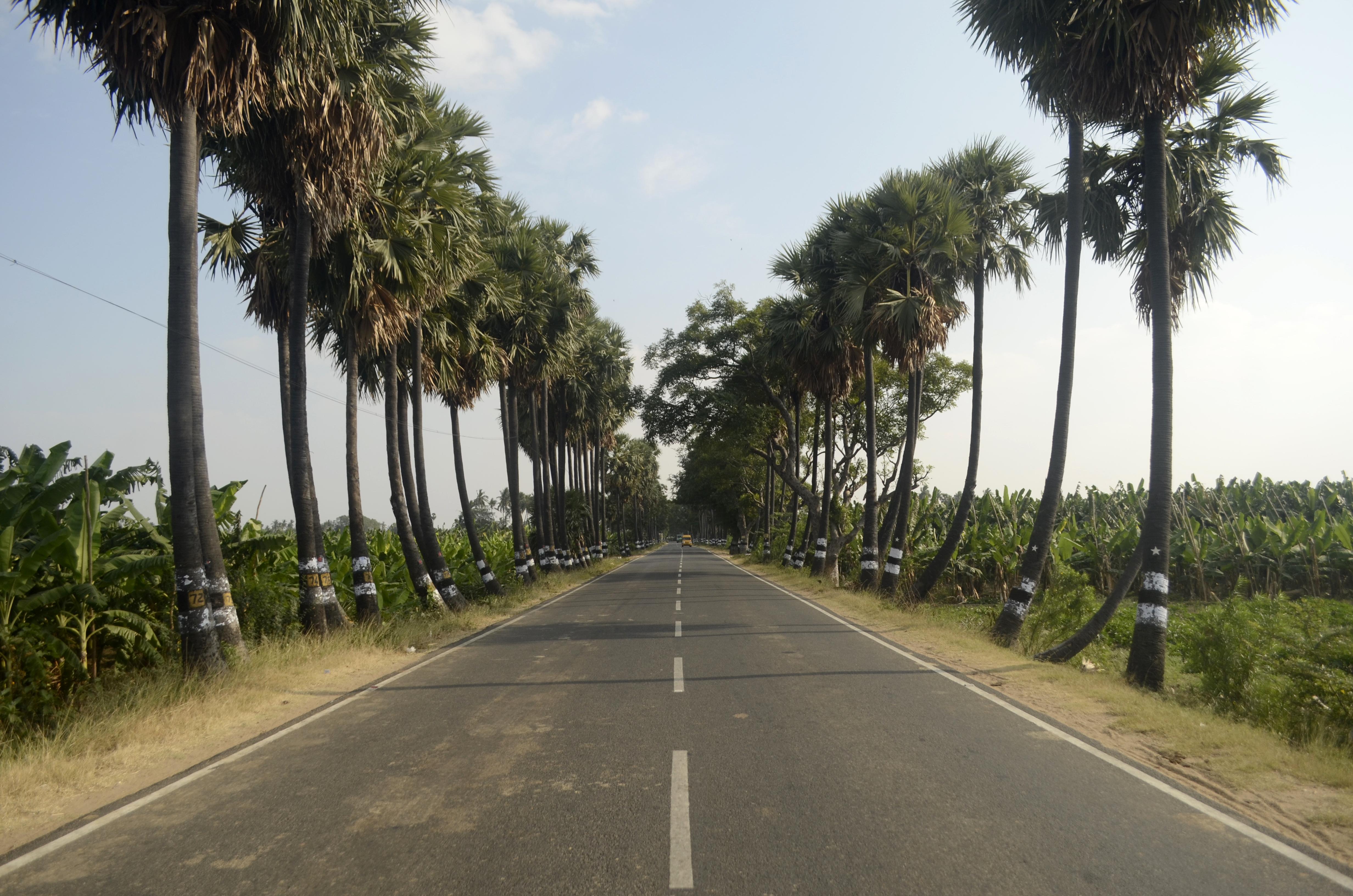 рисунки шинуазри фото дорога пальмы теперь очередь самыми-самыми