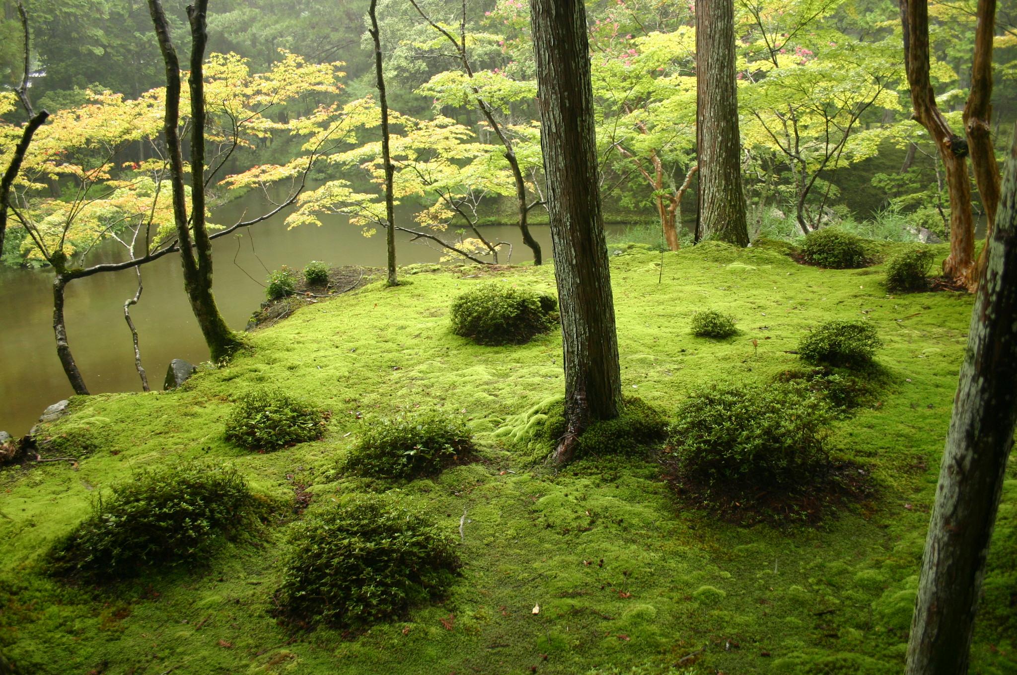 Jardin Japonais Wikipédia