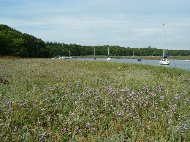 Sea Lavender on the Beaulieu River bank - geograph.org.uk - 332464