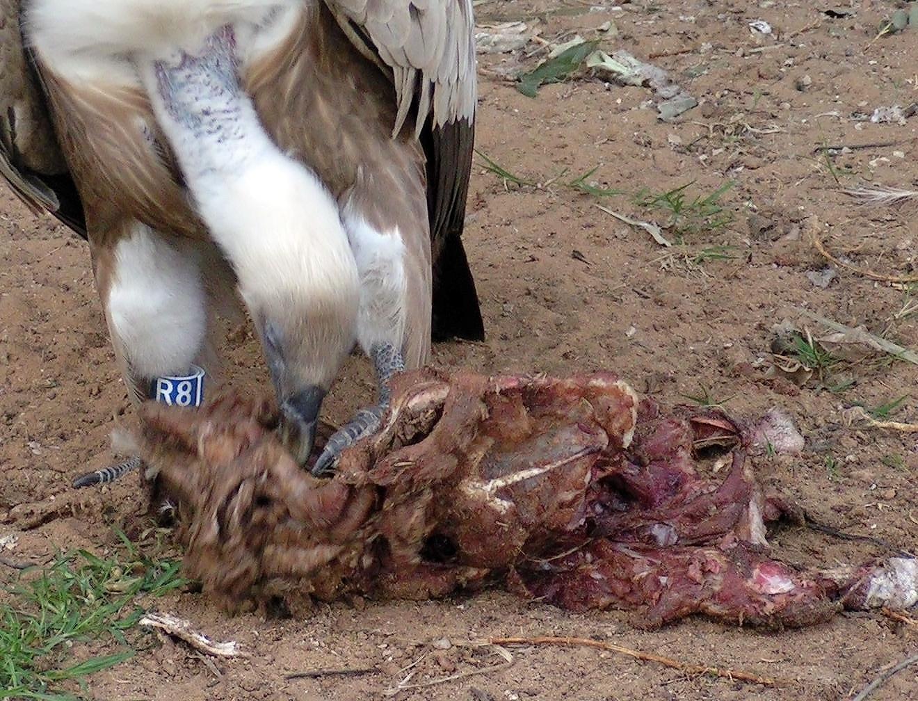 durchfall hund essen
