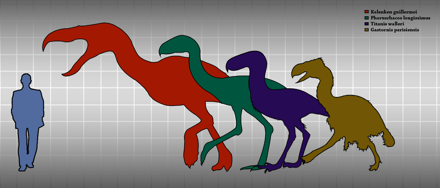 Spinosaurus Terror_birds_and_Gastornis_height_comparison