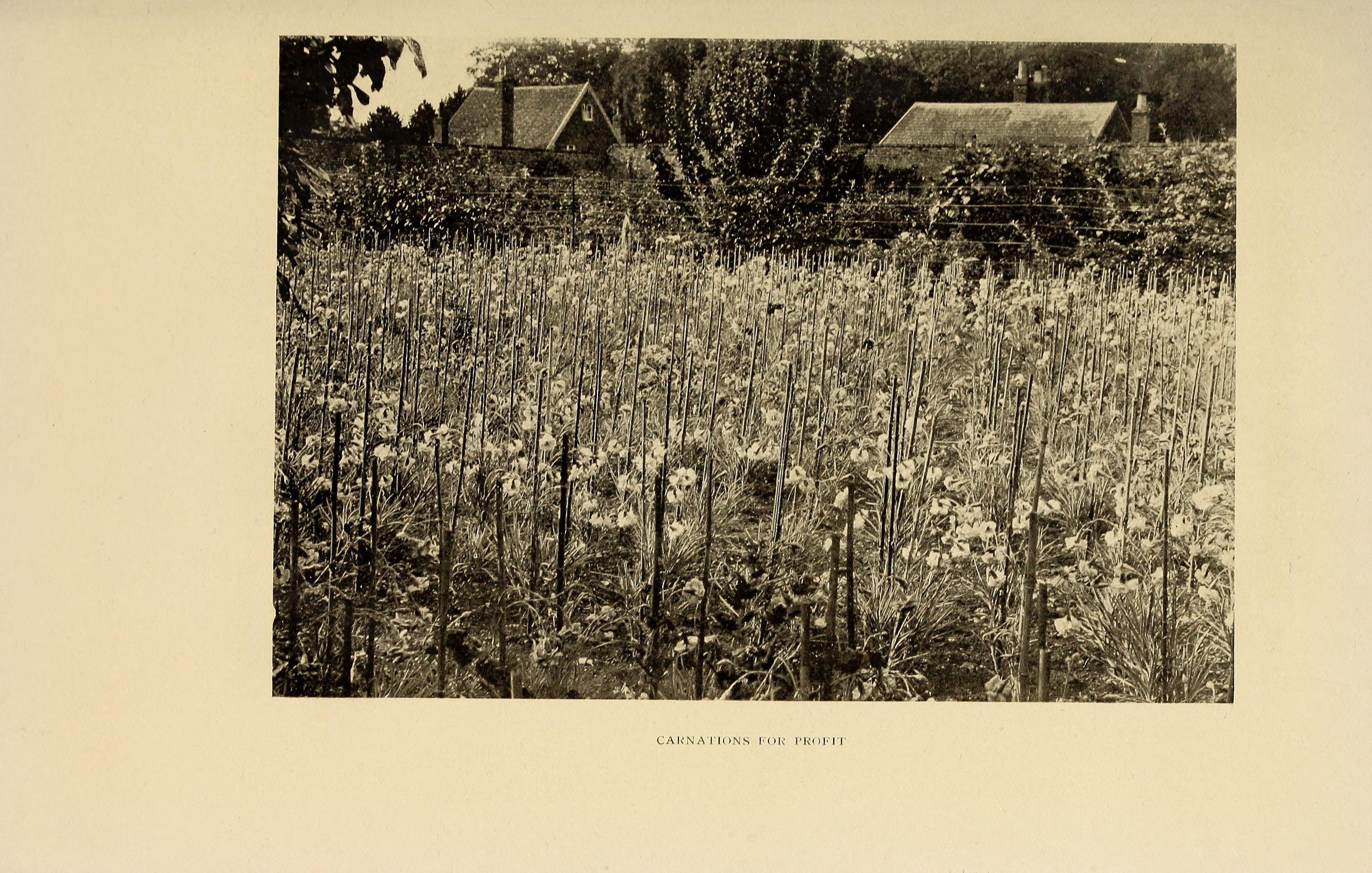 File:The book of market gardening (1906) (20404965021).jpg ...