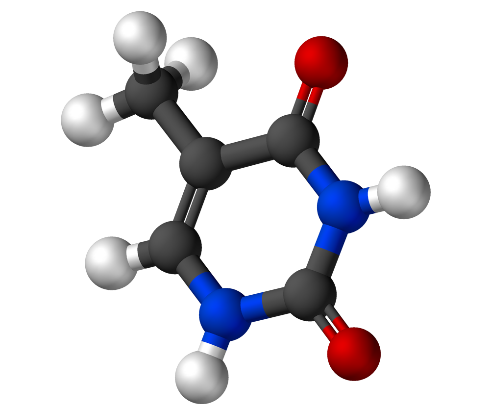 Thymine Structure Ball and Stick