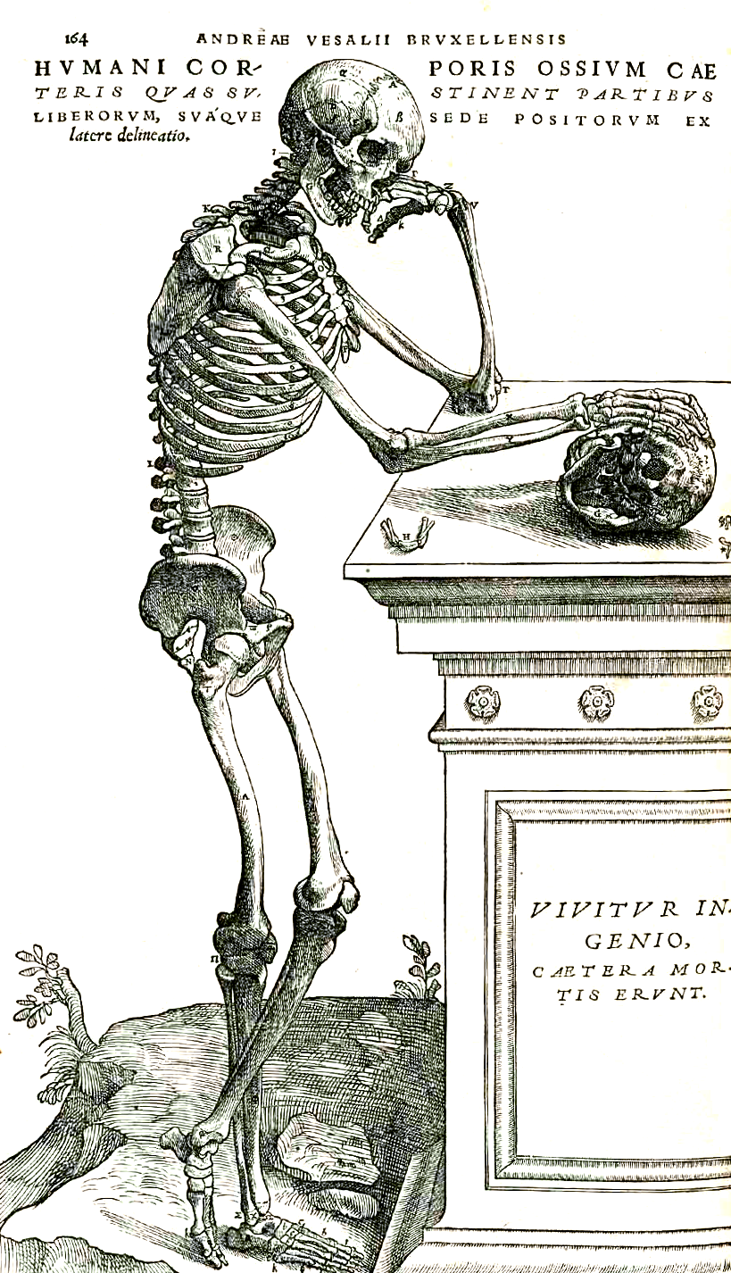 https://upload.wikimedia.org/wikipedia/commons/8/88/Vesalius_164frc.png