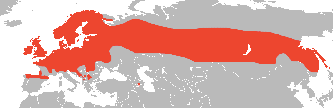 https://upload.wikimedia.org/wikipedia/commons/8/88/Vivaprous_lizard_range.png