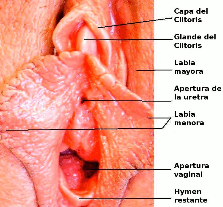 vaginales