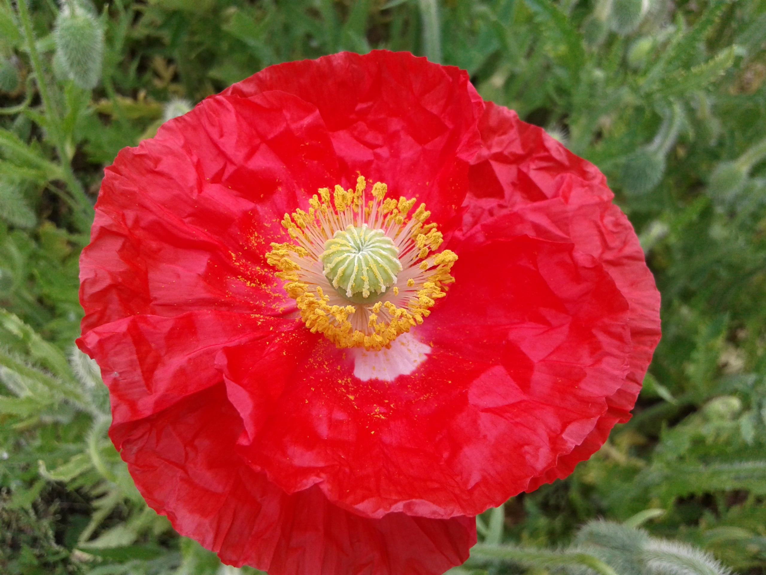 Filea beautiful red flowerg wikimedia commons filea beautiful red flowerg izmirmasajfo