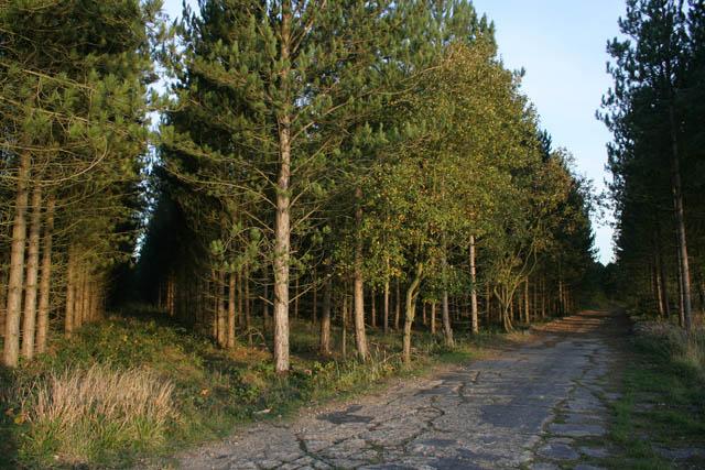A walk through Twyford Wood, No 4 - geograph.org.uk - 272055