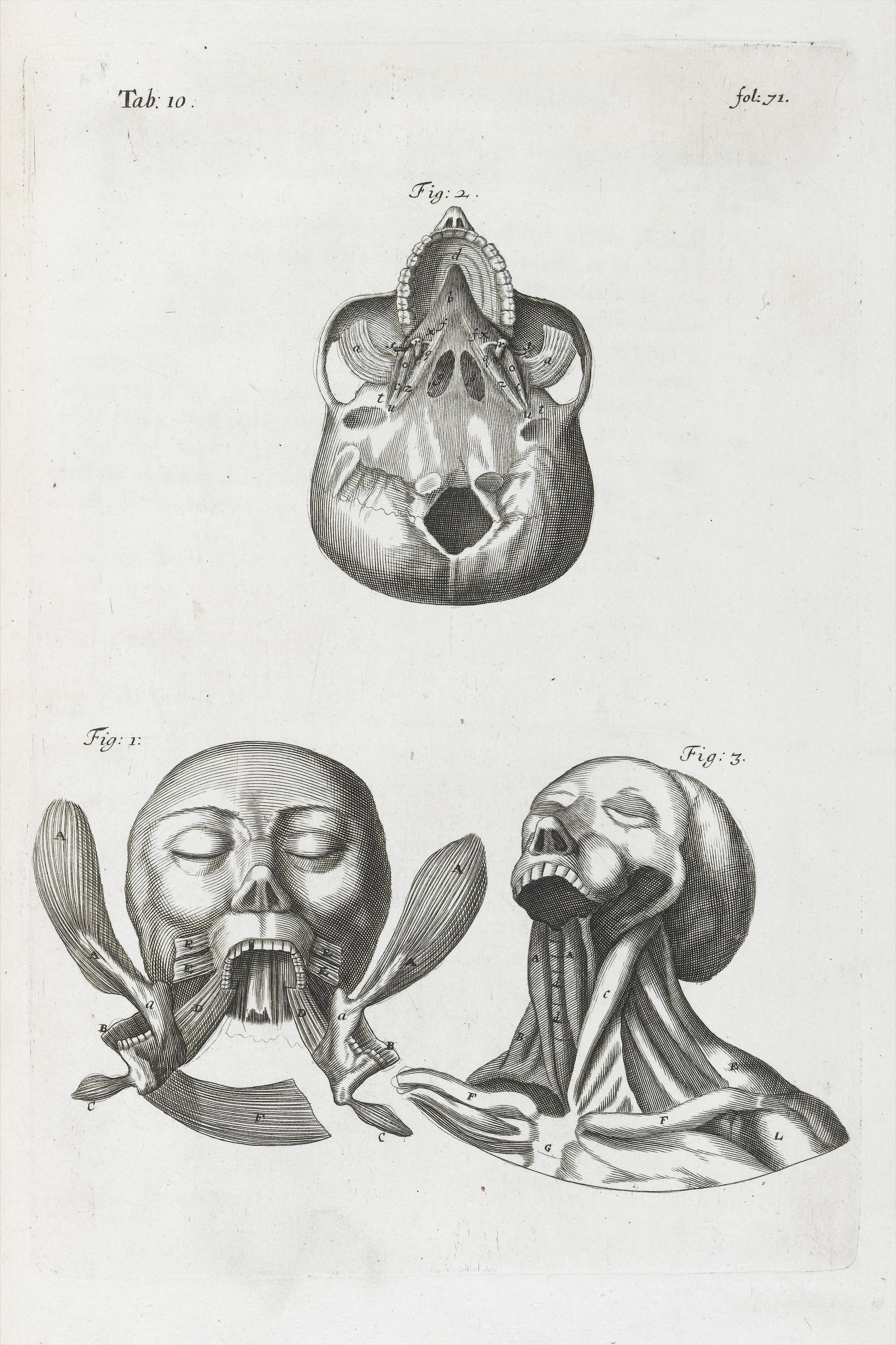 Anatomy of human neck and throat
