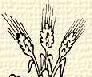 Búzakalász (heraldika).PNG