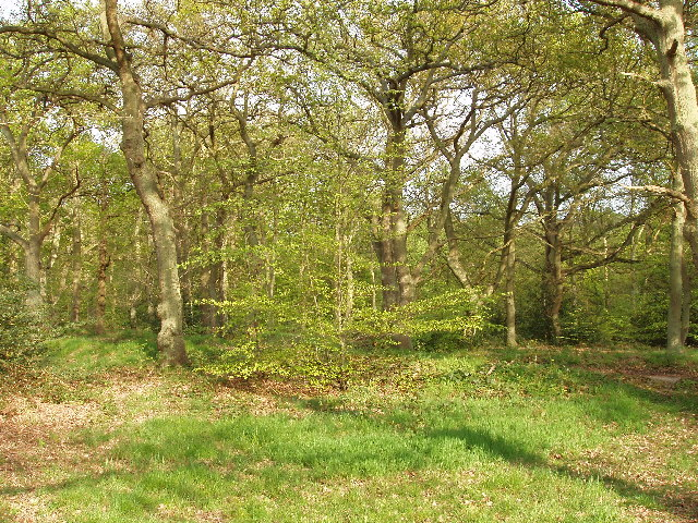 Burnham Beeches - geograph.org.uk - 18931