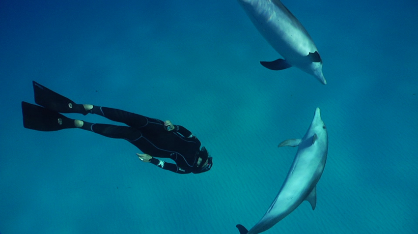 file contact with free bottlenose dolphins jpg wikimedia commons