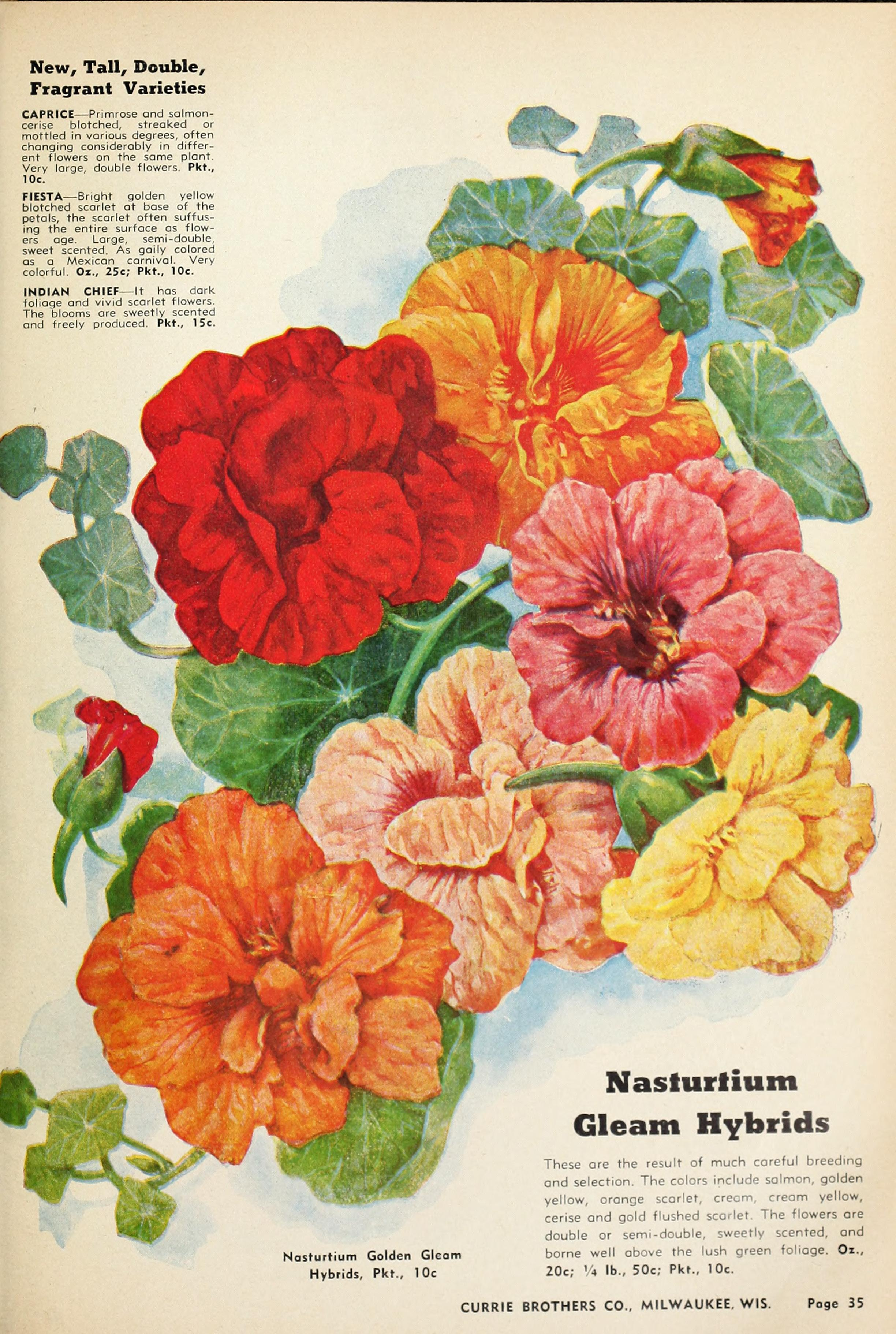 File:Currie\'s garden annual (1942) (20630763958).jpg - Wikimedia Commons