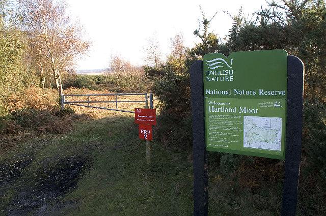 Hartland Moor NNR, Dorset - geograph.org.uk - 82501
