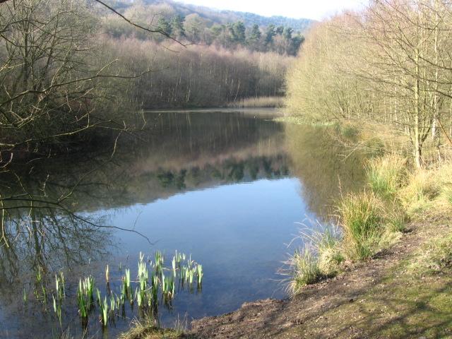 Hollingworth Nature Reserve - geograph.org.uk - 1209558