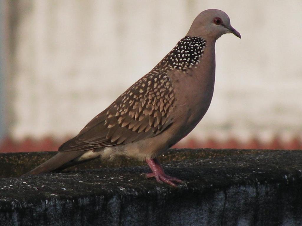Doves wikiquote voltagebd Gallery