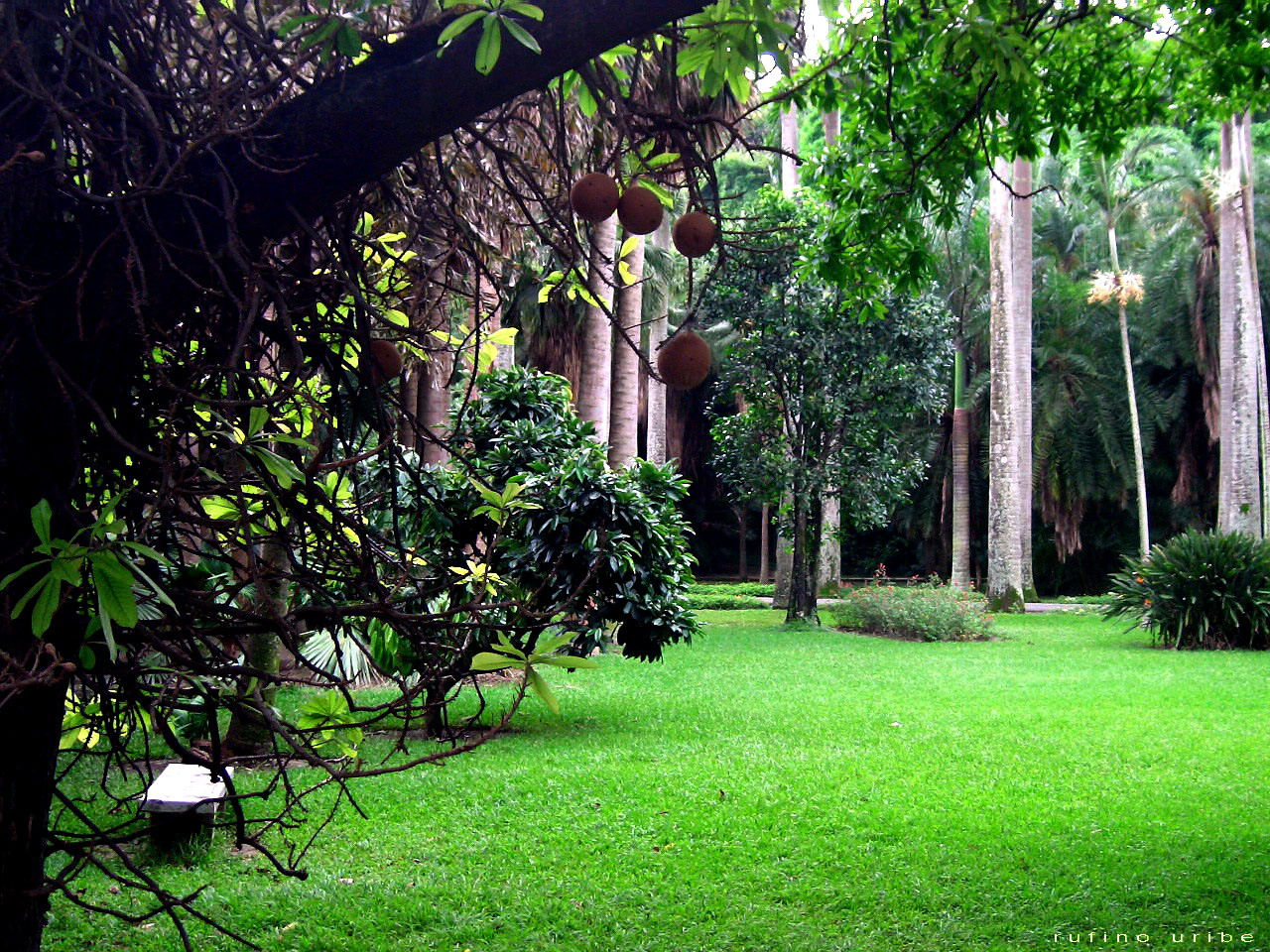 File jardin botanico wikimedia commons for Jardin 00 garden