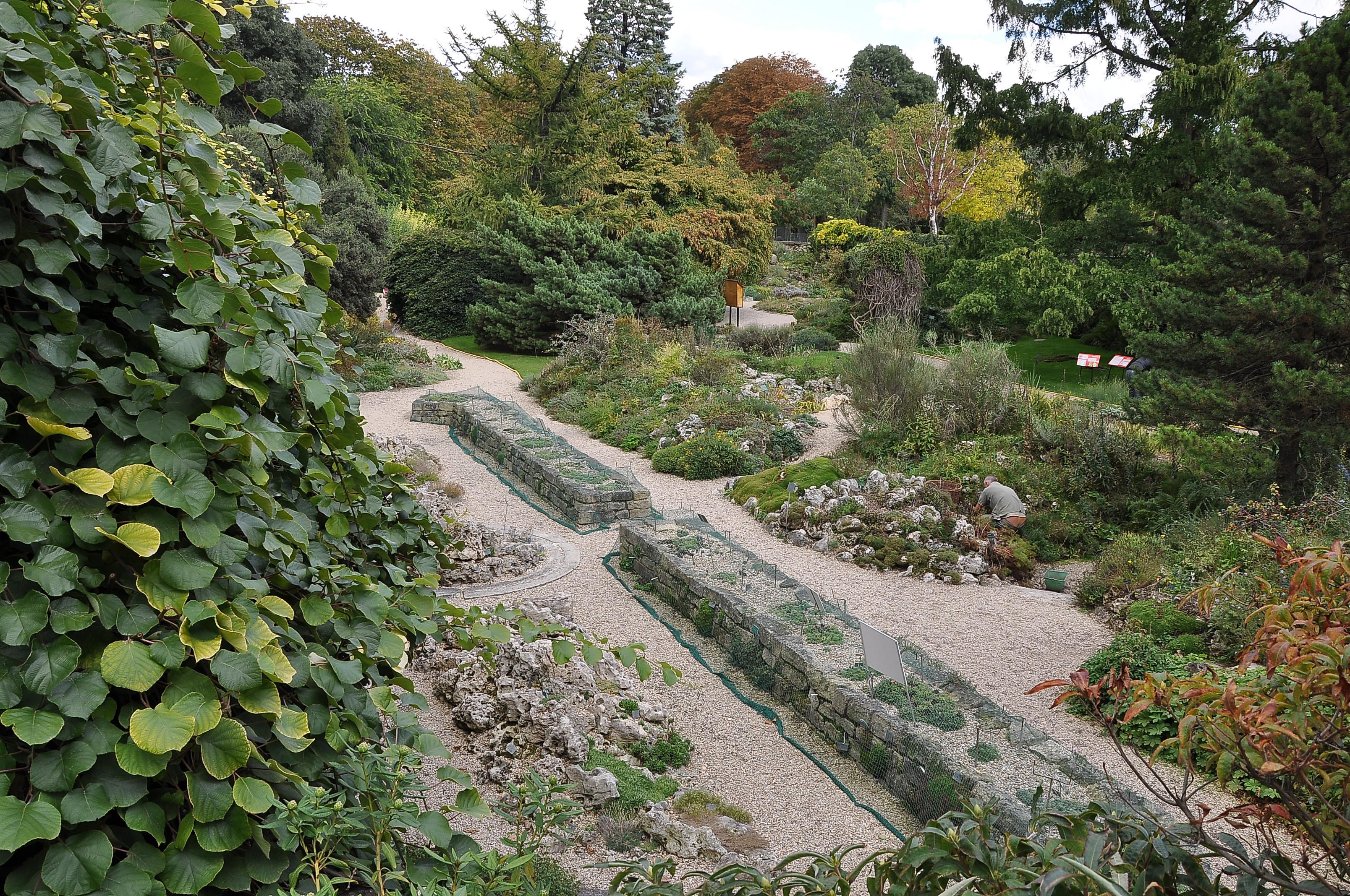 Plantes du jardin elegant plantes du jardin with plantes for Plantes du jardin