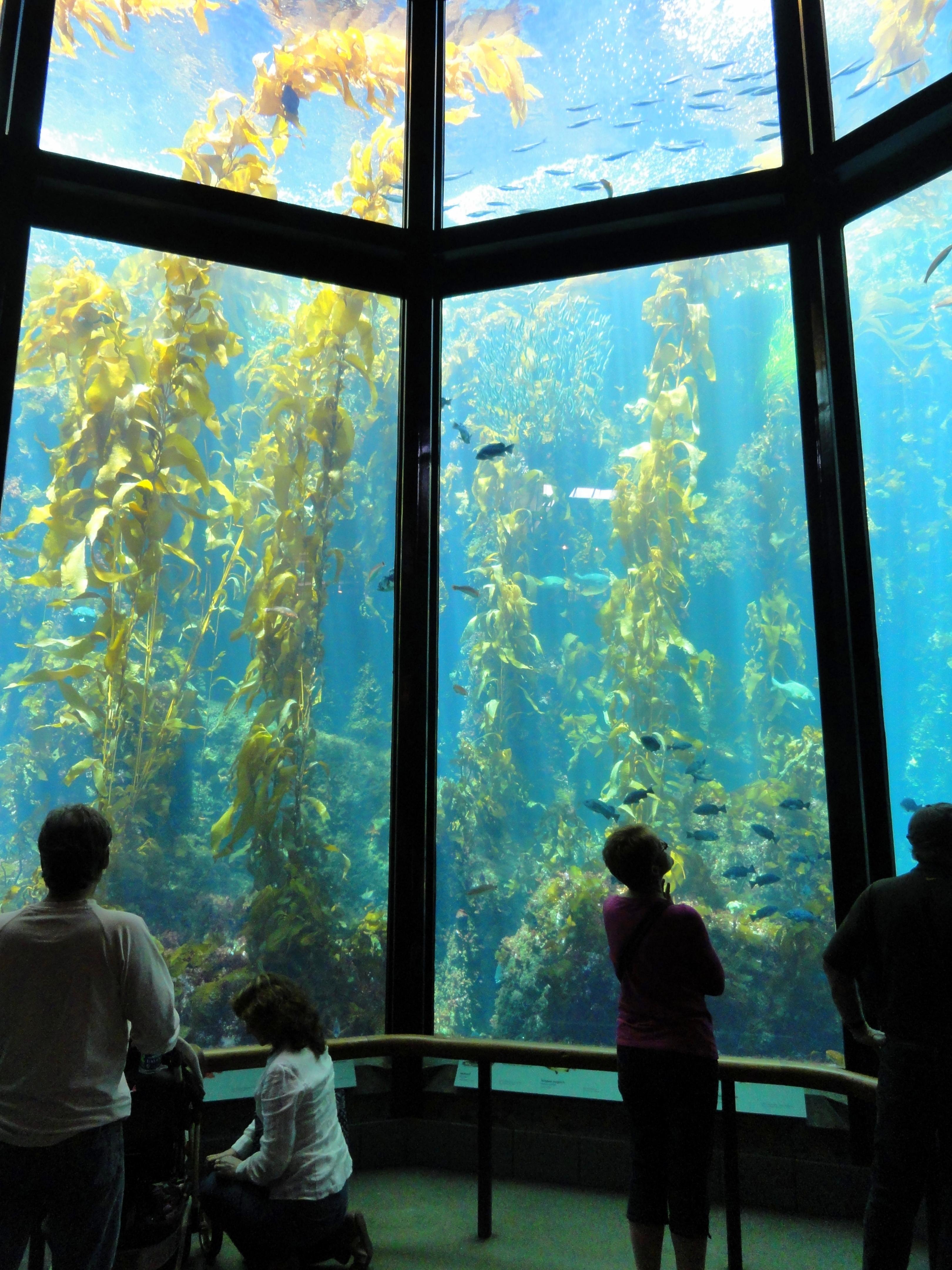 عکس های HD از کلپ ها (جلبک قهوه ای) Kelp