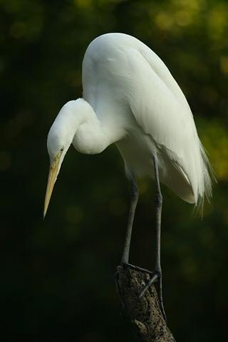 Lightmatter egret