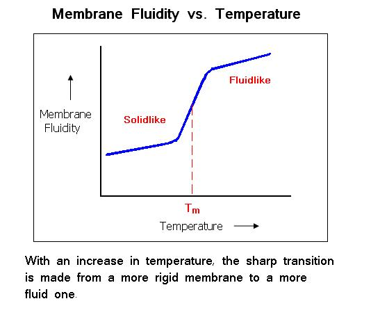 effect temperature on permeability of membrane This report of an investigation into the effect of temperature on membrane permeability in beetroot tissue is well-structured and clearly written.