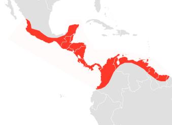 The average litter size of a Sinaloan mastiff bat is 1