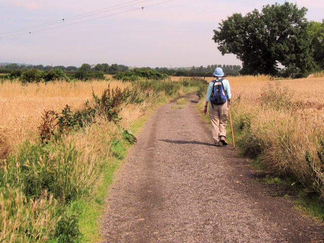 On the track to Wilstone Reservoir before the wheat was cut - geograph.org.uk - 1440341