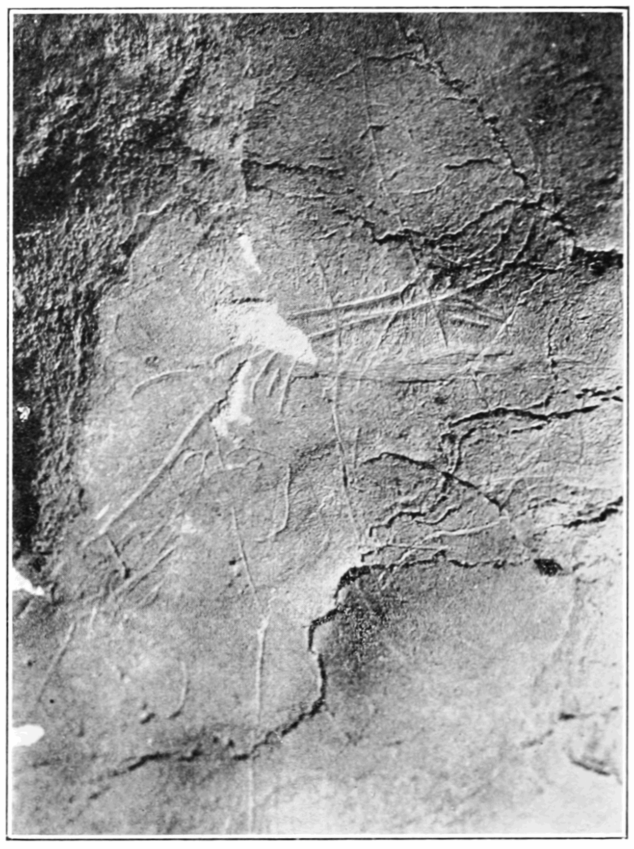 PSM V83 D024 Head of reindeer engraved on cavern wall at tuc daudoubert.png