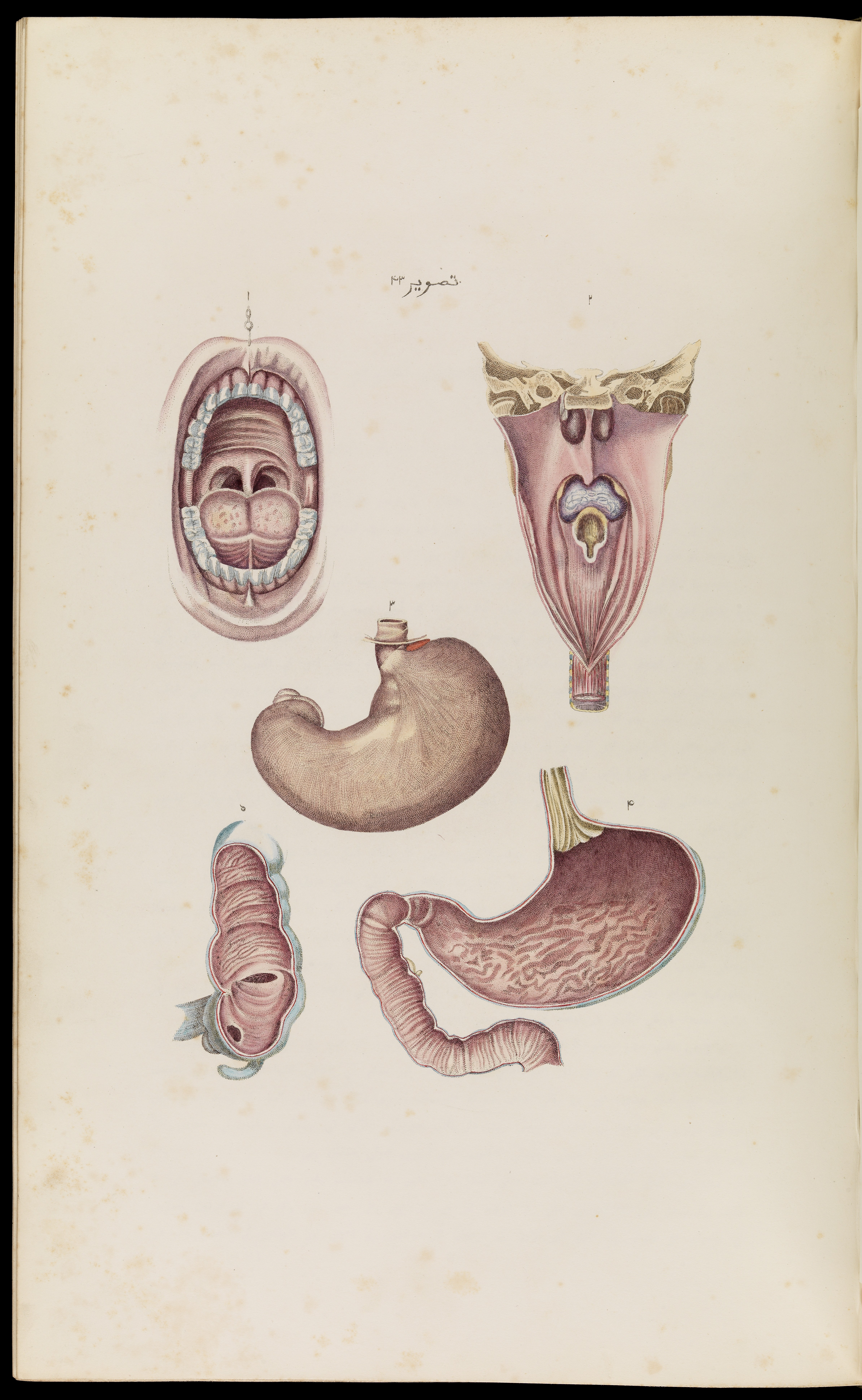 Filepage From An Atlas Of Anatomical Plates Wellcome L0067255g