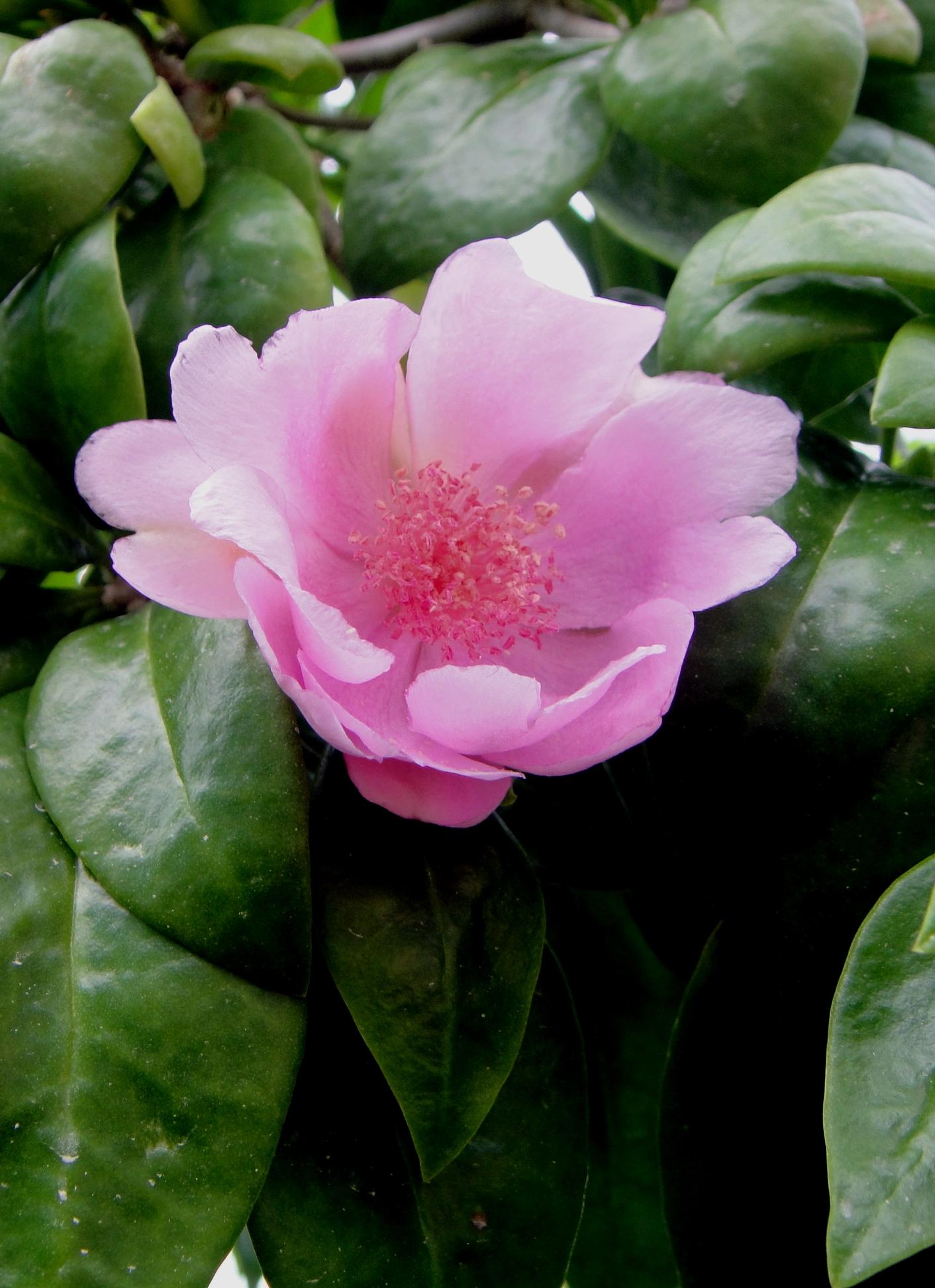 Wiki Floral emblem upcScavenger