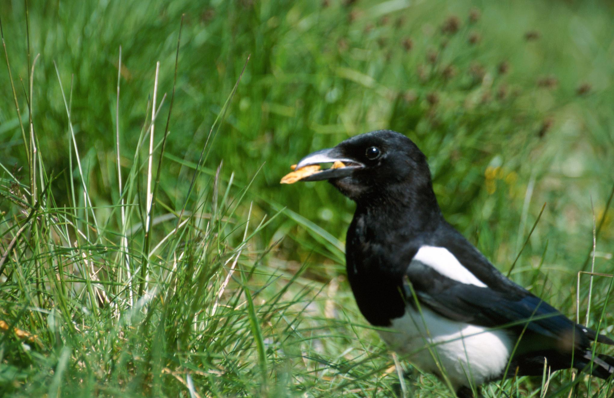 Veľké vtáky biele mláďatá