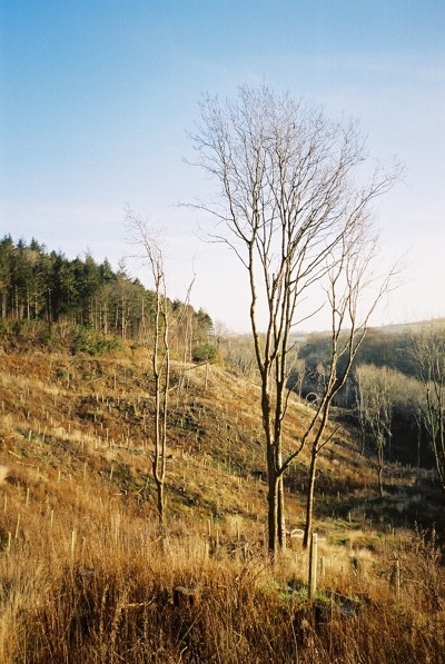 Plantations above the Caldew - geograph.org.uk - 96928