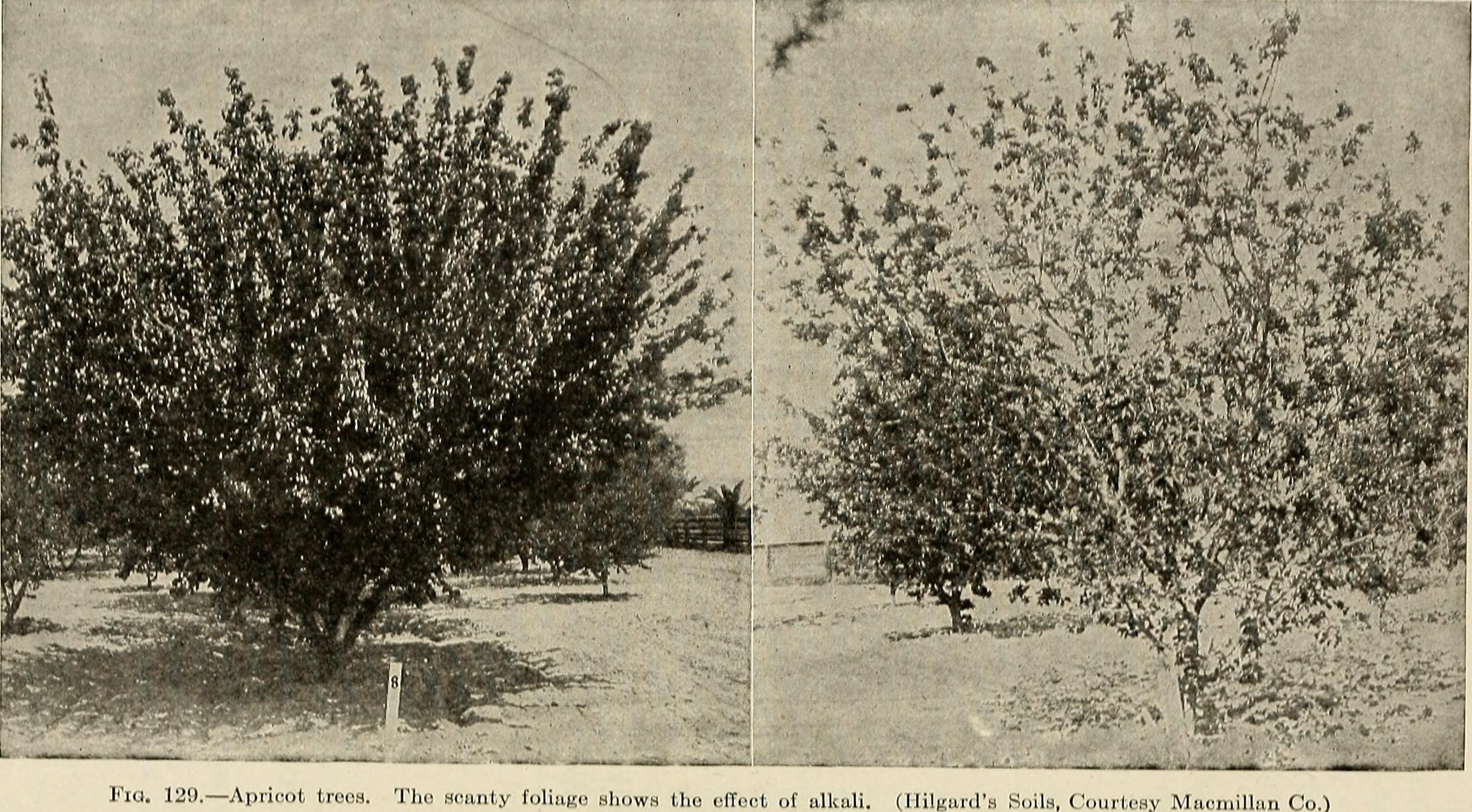 File:Soil physics and management (1917) (14761572586).jpg ...