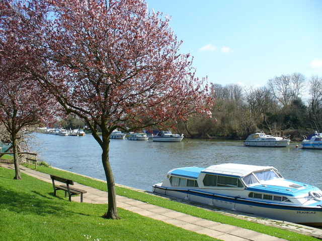 Spring Blossom, Sunbury-on-Thames - geograph.org.uk - 365794