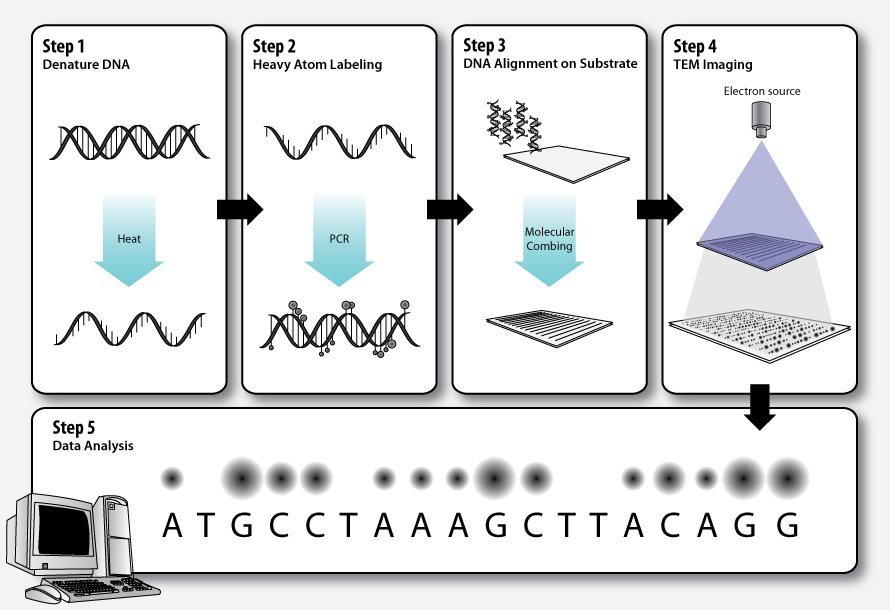 Transmission electron microscopy DNA sequencing - Wikipedia, the ...