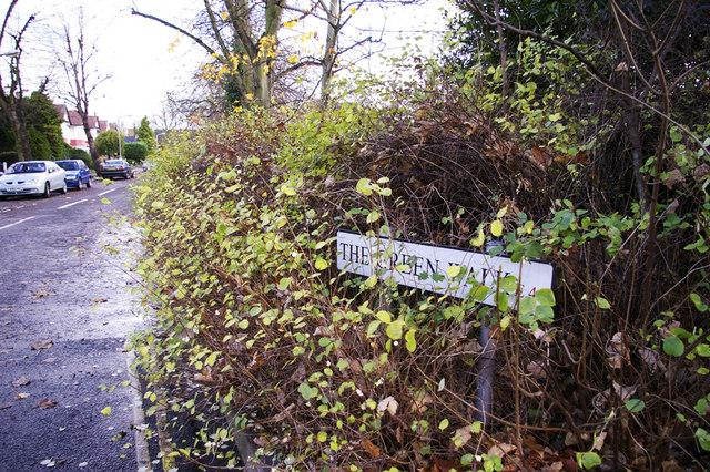 File:The Green Walk, Chingford, London E4 - geograph.org.uk - 1053315.jpg