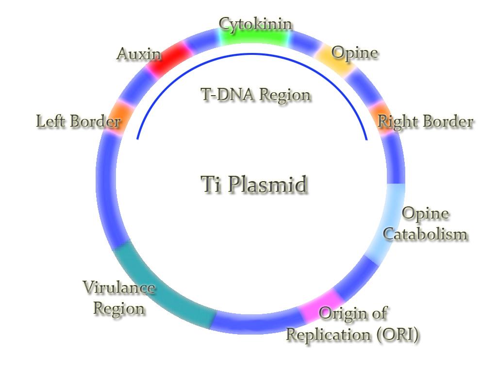 Addgene What is a Plasmid