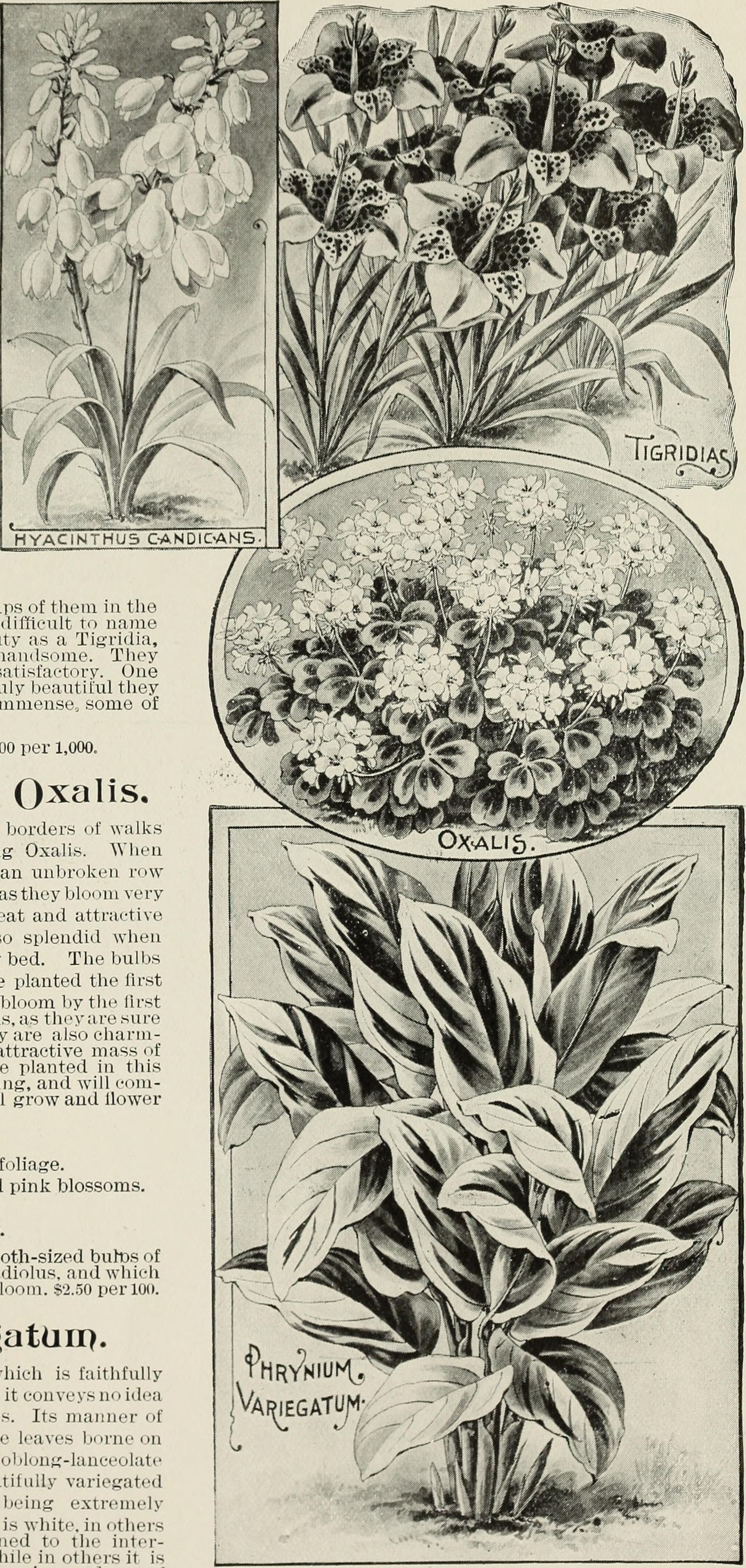 Is iris a flower gallery flower wallpaper hd is iris a flower choice image flower wallpaper hd is iris a flower image collections flower izmirmasajfo