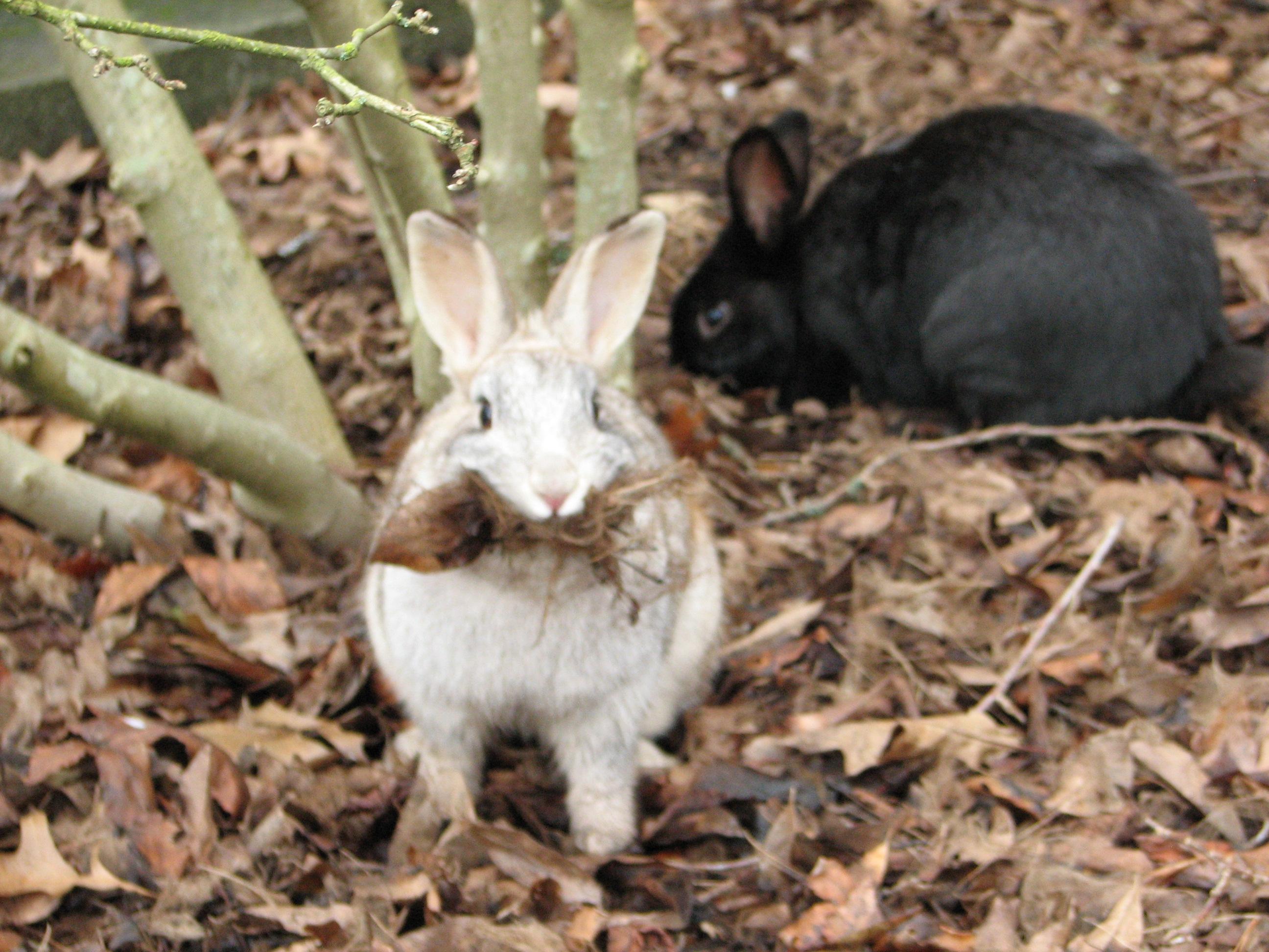 Do Cats Eat Bunny Rabbits