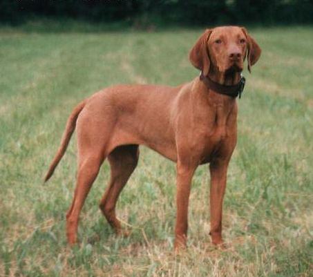Dog Breed Origin Map
