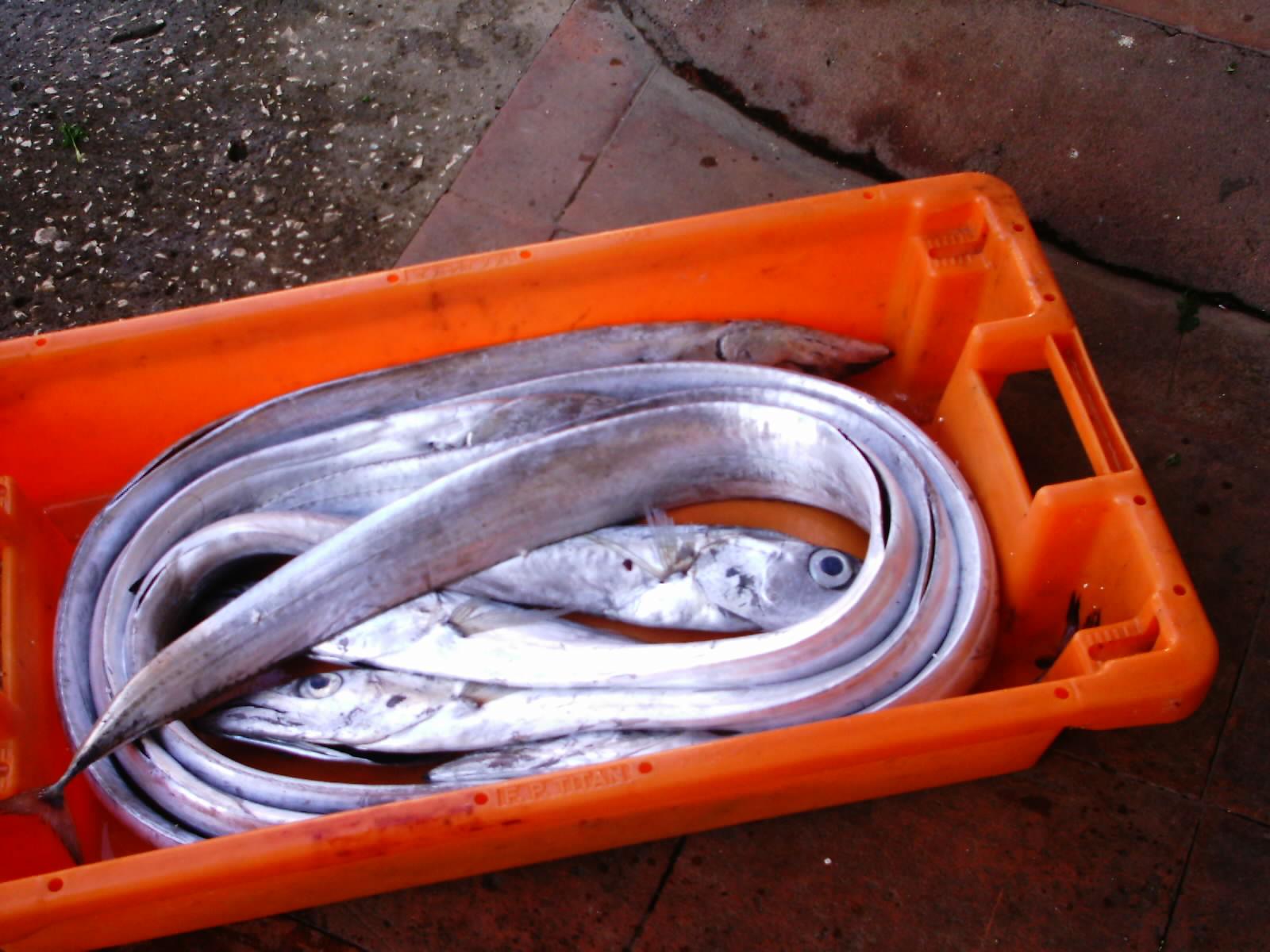 Les tentes dhiver pour la pêche le prix le bouvreuil 3 chez