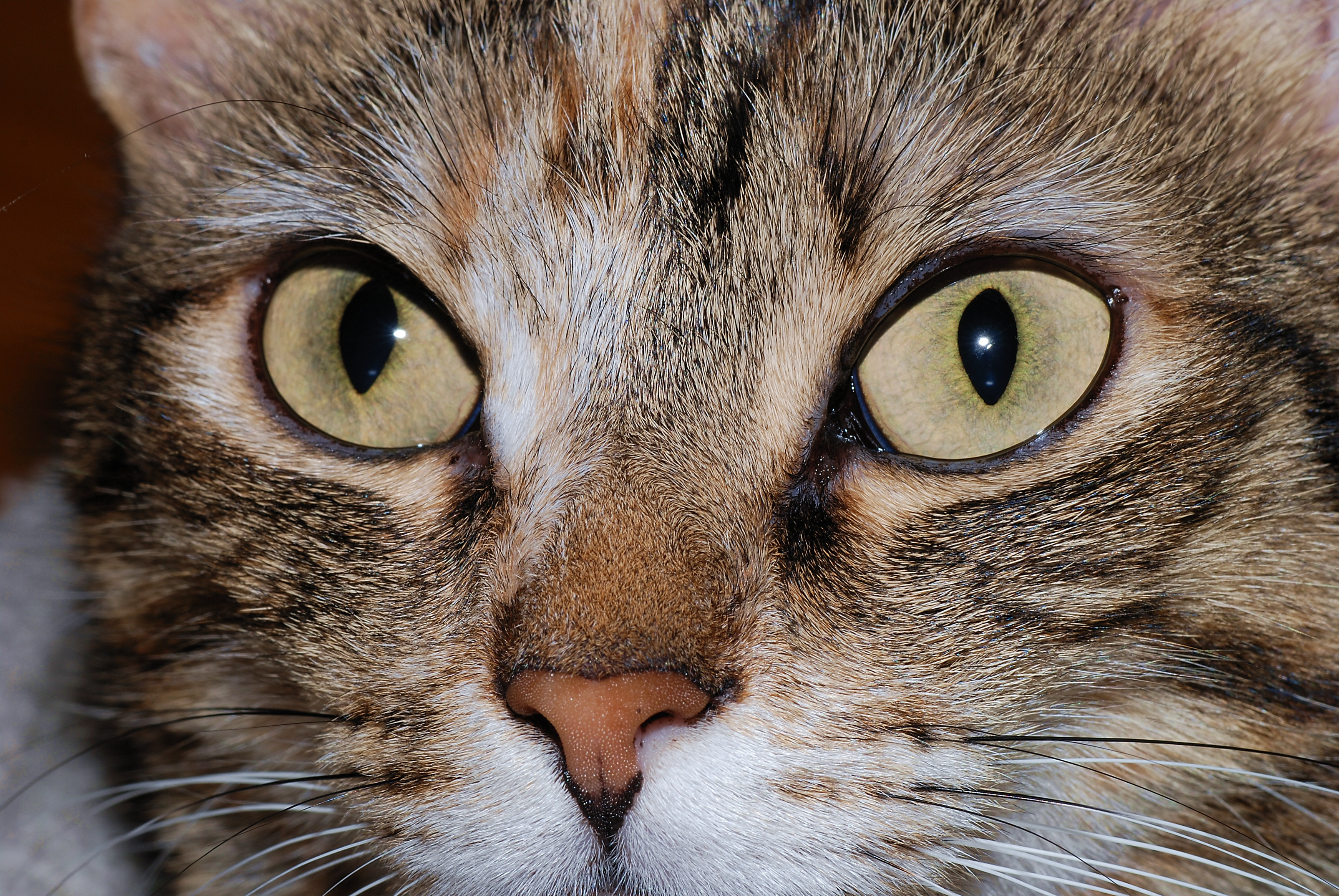 Cat S Eye Site Eqtraders Com