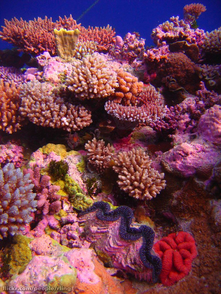 Reefporn Beauty Underwater