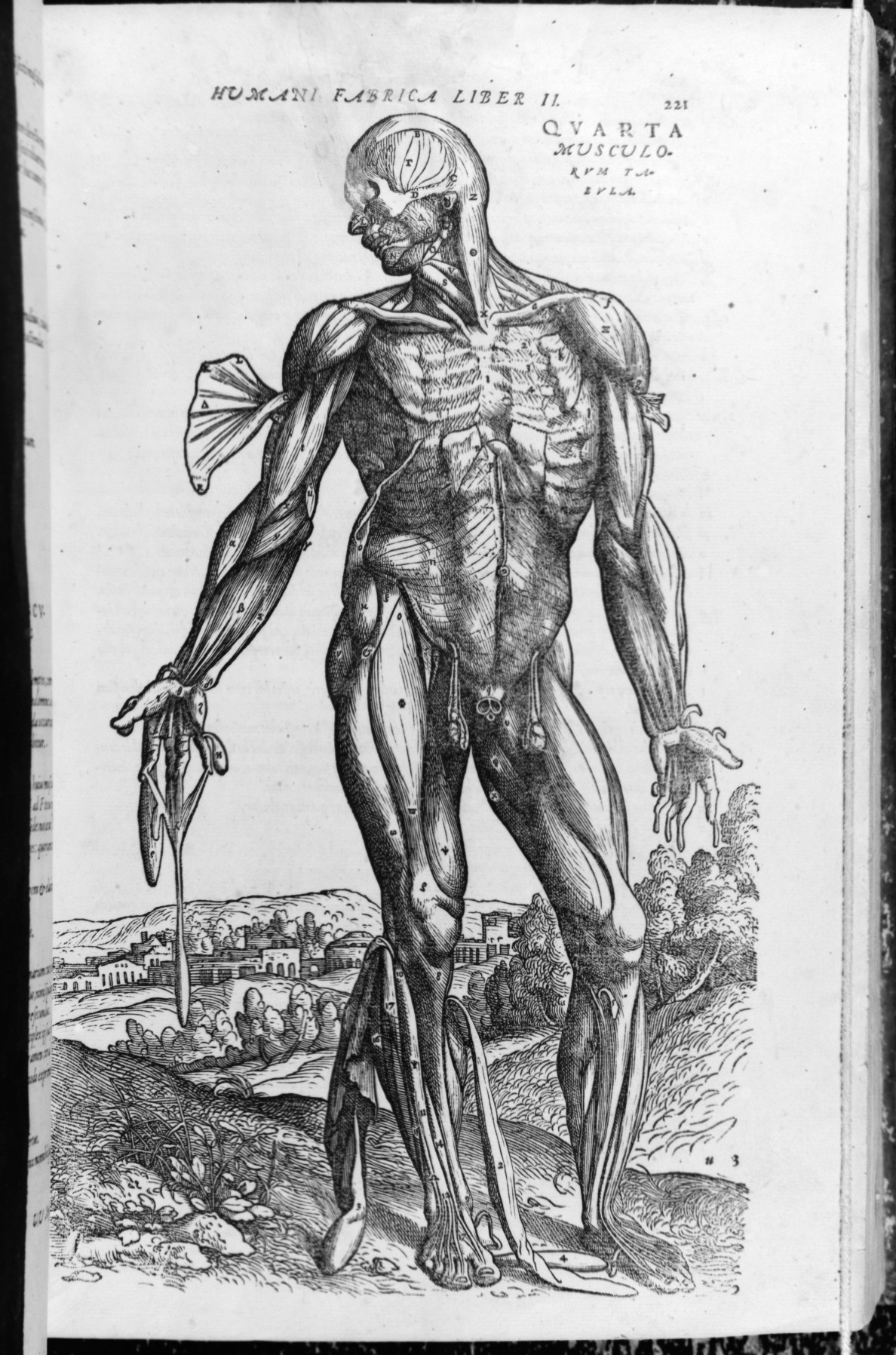Filede Humani Corporis Fabrica Of The Structure Of The Human Body