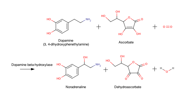 Dopamine beta-hydroxylase reaction.png