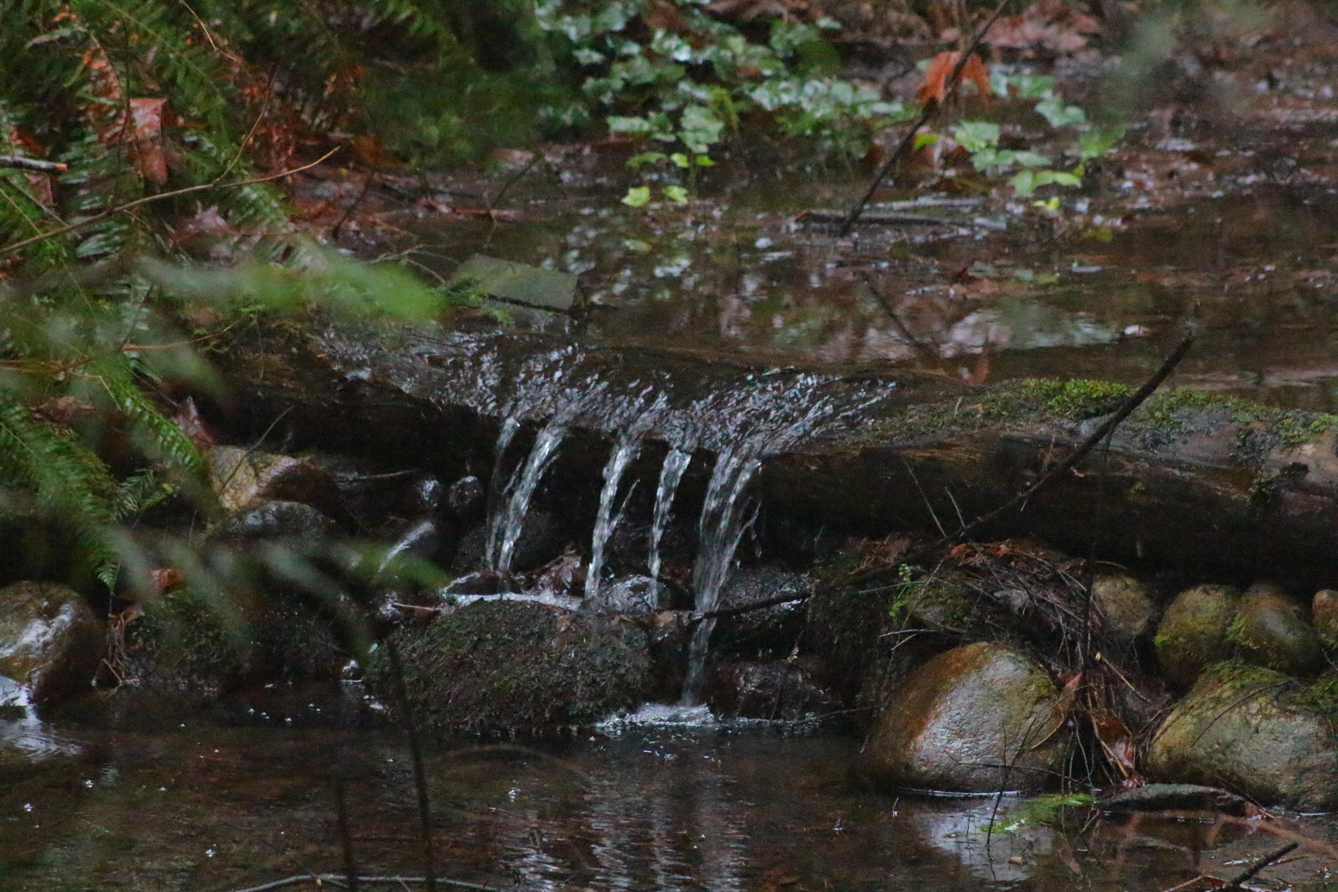 fall season in canada