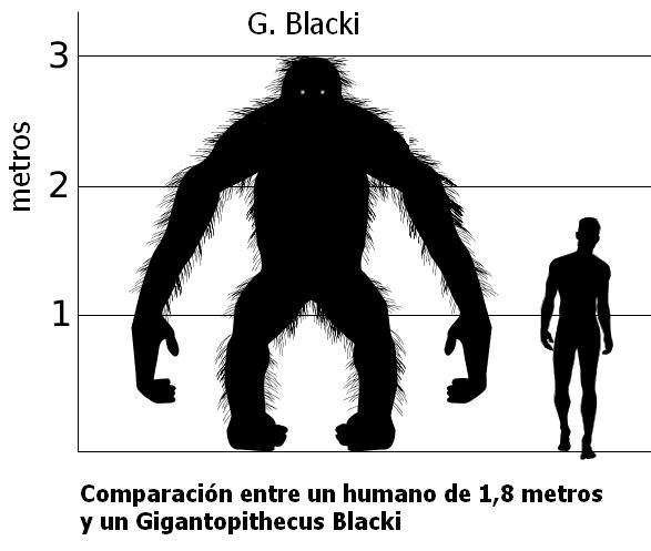 Gigantopithecus File:Gigantopithecus v...